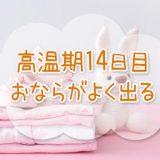 高温期14日目_妊娠検査薬